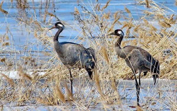 Птицы-Татарстана-Описание-названия-виды-и-фото-птиц-Татарстана-12
