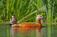 Птицы Татарстана. Описание, названия, виды и фото птиц Татарстана