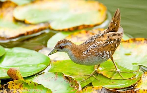 Птицы-Татарстана-Описание-названия-виды-и-фото-птиц-Татарстана-15