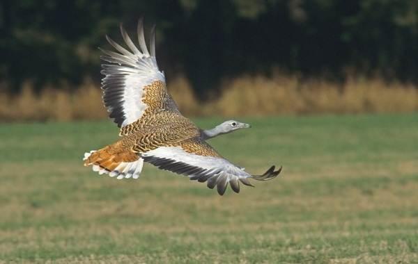 Птицы-Татарстана-Описание-названия-виды-и-фото-птиц-Татарстана-17