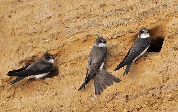 Птицы-Татарстана-Описание-названия-виды-и-фото-птиц-Татарстана-18