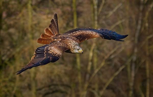 Птицы-Татарстана-Описание-названия-виды-и-фото-птиц-Татарстана-2