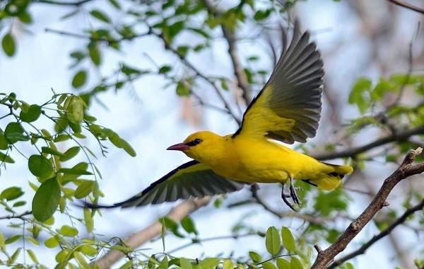Птицы-Татарстана-Описание-названия-виды-и-фото-птиц-Татарстана-21