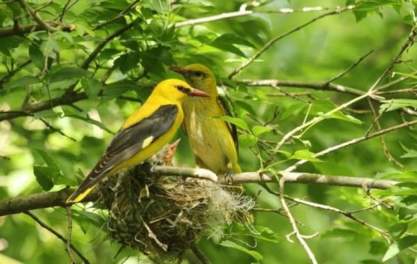 Птицы-Татарстана-Описание-названия-виды-и-фото-птиц-Татарстана-22