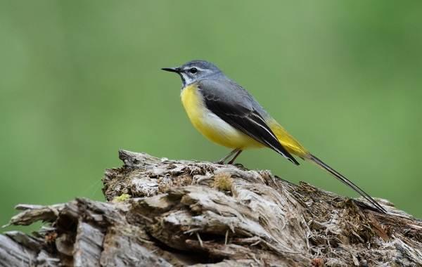 Птицы-Татарстана-Описание-названия-виды-и-фото-птиц-Татарстана-25