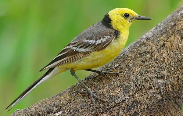 Птицы-Татарстана-Описание-названия-виды-и-фото-птиц-Татарстана-26