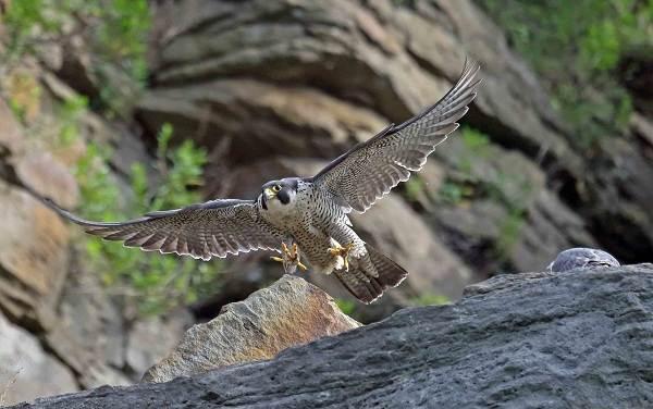 Птицы-Татарстана-Описание-названия-виды-и-фото-птиц-Татарстана-3