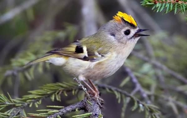 Птицы-Татарстана-Описание-названия-виды-и-фото-птиц-Татарстана-30
