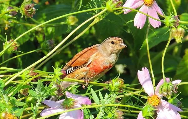 Птицы-Татарстана-Описание-названия-виды-и-фото-птиц-Татарстана-32