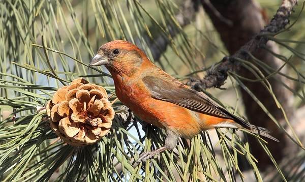 Птицы-Татарстана-Описание-названия-виды-и-фото-птиц-Татарстана-35