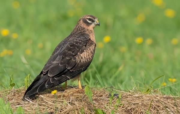Птицы-Татарстана-Описание-названия-виды-и-фото-птиц-Татарстана-36