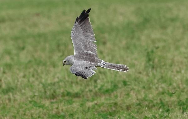 Птицы-Татарстана-Описание-названия-виды-и-фото-птиц-Татарстана-37