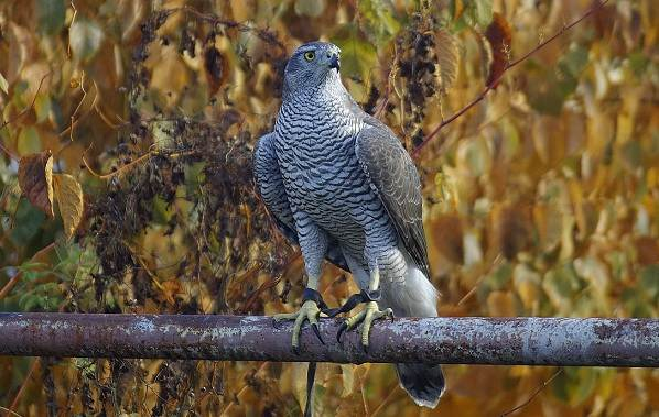 Птицы-Татарстана-Описание-названия-виды-и-фото-птиц-Татарстана-6