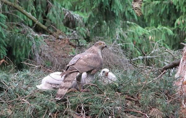 Птицы-Татарстана-Описание-названия-виды-и-фото-птиц-Татарстана-7