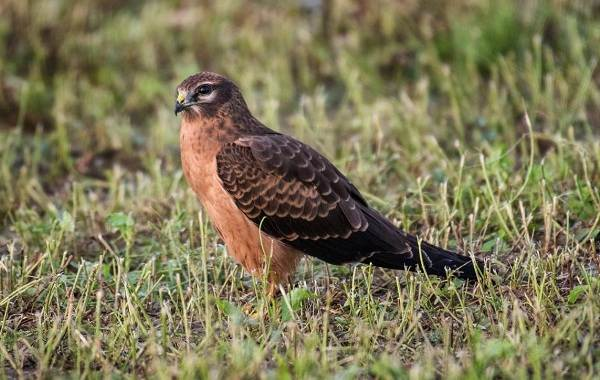 Птицы-Татарстана-Описание-названия-виды-и-фото-птиц-Татарстана-8