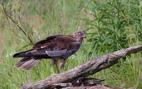 Птицы-Татарстана-Описание-названия-виды-и-фото-птиц-Татарстана-9