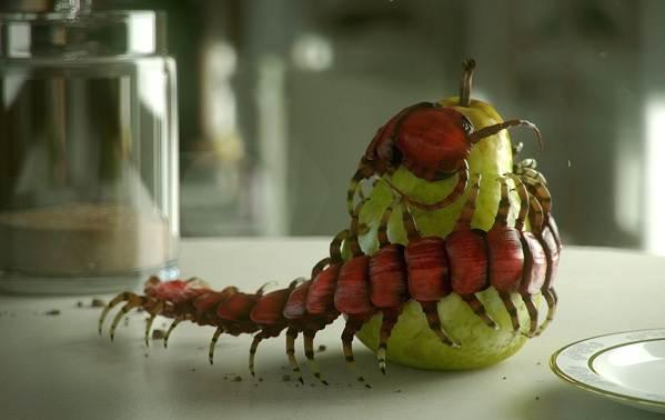 Сколопендра-многоножка-Описание-особенности-виды-образ-жизни-и-среда-обитания-сколопендры-7