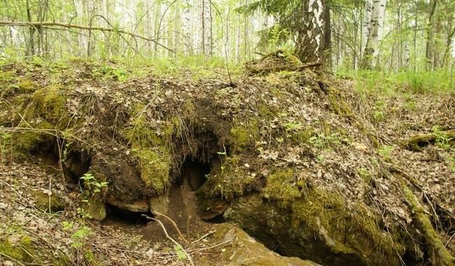 Барсук-животное-Описание-особенности-виды-образ-жизни-и-среда-обитания-барсука-15
