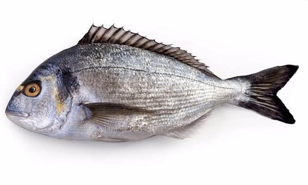 Дорадо-рыба-Описание-особенности-виды-образ-жизни-и-среда-обитания-дорадо-9