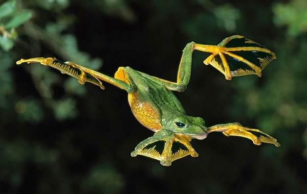 Древесная-лягушка-Описание-особенности-виды-образ-жизни-и-среда-обитания-древесных-лягушек-16