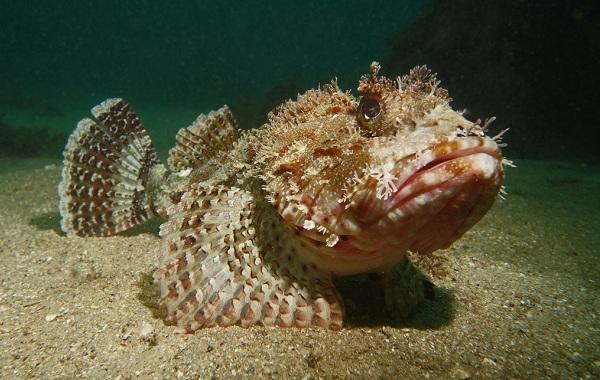 Ерш-рыба-Описание-особенности-виды-образ-жизни-и-среда-обитания-ершей-13