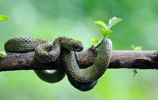 Гадюка-змея-Описание-особенности-виды-образ-жизни-и-среда-обитания-гадюки-7