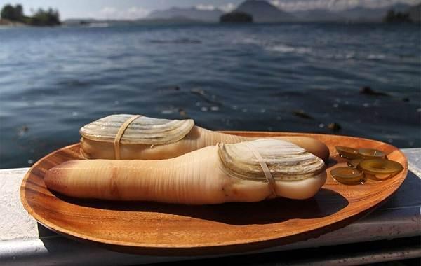 Гуидак-моллюск-Описание-особенности-виды-образ-жизни-и-среда-обитания-гуидака-1
