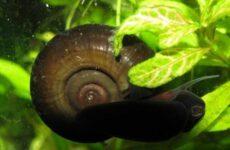 Катушка улитка моллюск. Описание, особенности, жизнедеятельность, польза и вред катушки улитки