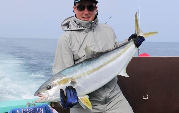 Лакедра-рыба-Описание-особенности-виды-образ-жизни-и-среда-обитания-лакедры-1