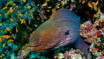 Мурена рыба. Описание, особенности, виды, образ жизни и среда обитания мурены