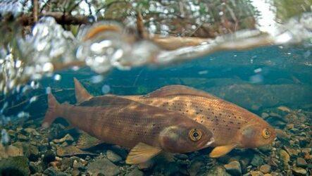 Рыбы Байкала. Описание, особенности, названия и фото видов рыбы в Байкале
