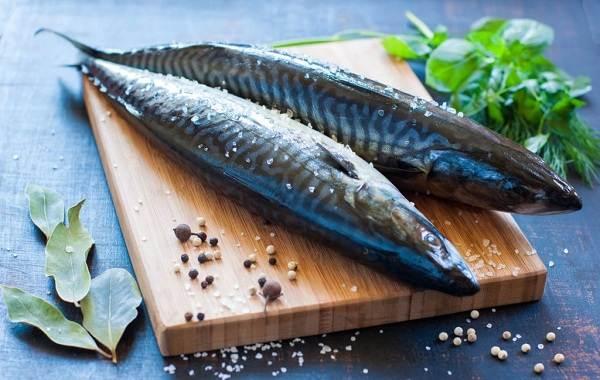 Скумбрия-рыба-Описание-особенности-виды-образ-жизни-и-среда-обитания-скумбрии-6