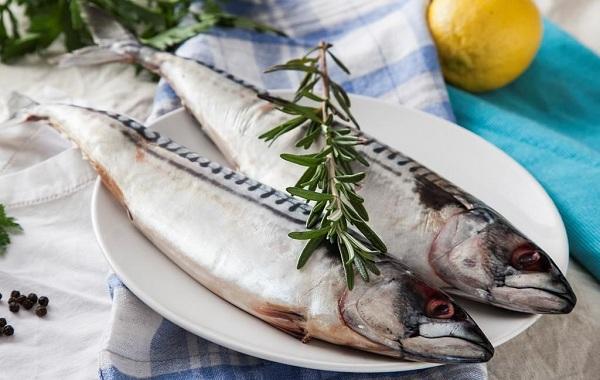 Скумбрия-рыба-Описание-особенности-виды-образ-жизни-и-среда-обитания-скумбрии-9