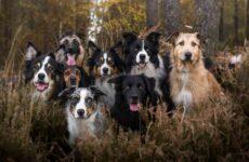Средние породы собак, их особенности, виды, названия и фото
