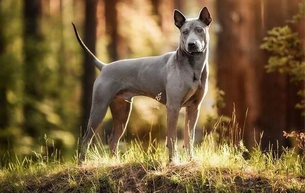 Средние-породы-собак-их-особенности-виды-названия-и-фото-10