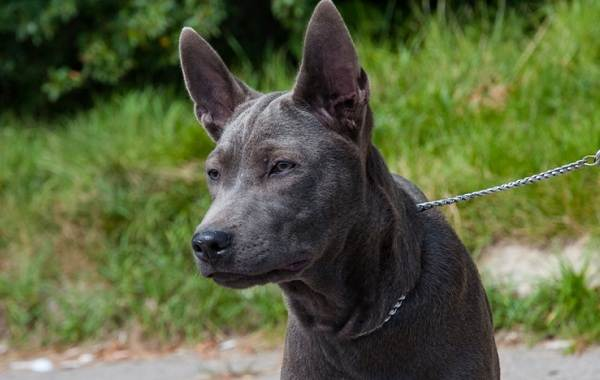 Средние-породы-собак-их-особенности-виды-названия-и-фото-11