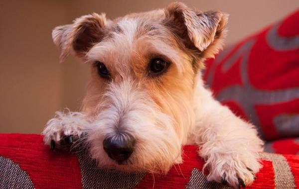Средние-породы-собак-их-особенности-виды-названия-и-фото-13