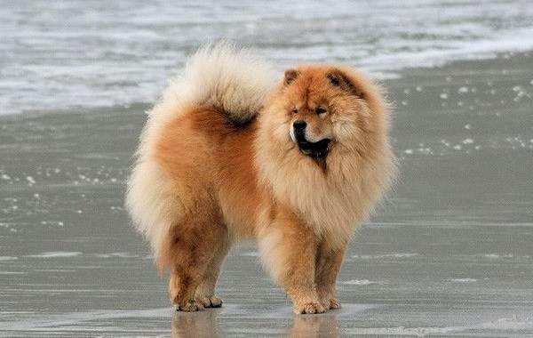 Средние-породы-собак-их-особенности-виды-названия-и-фото-19