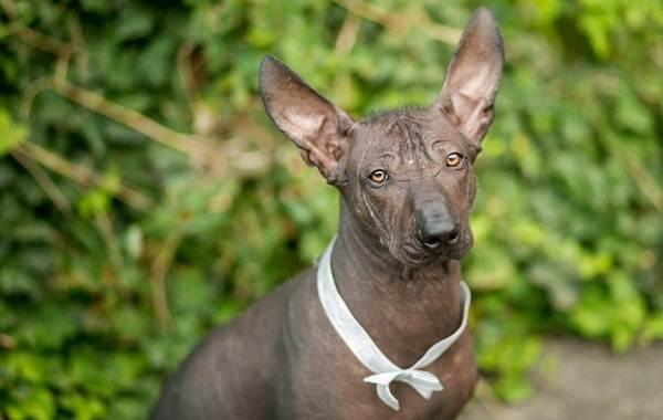 Средние-породы-собак-их-особенности-виды-названия-и-фото-20