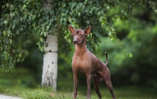 Средние-породы-собак-их-особенности-виды-названия-и-фото-21