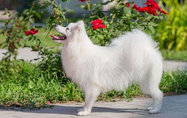Средние-породы-собак-их-особенности-виды-названия-и-фото-22