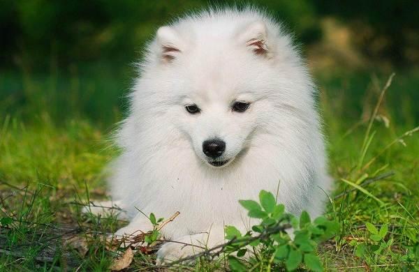 Средние-породы-собак-их-особенности-виды-названия-и-фото-23