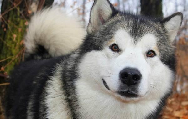 Средние-породы-собак-их-особенности-виды-названия-и-фото-25