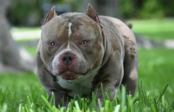 Средние-породы-собак-их-особенности-виды-названия-и-фото-28