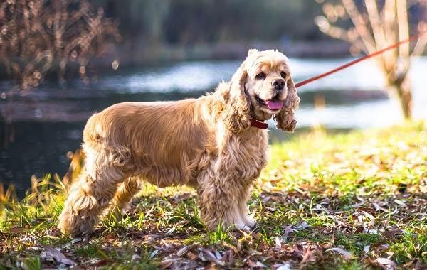 Средние-породы-собак-их-особенности-виды-названия-и-фото-3