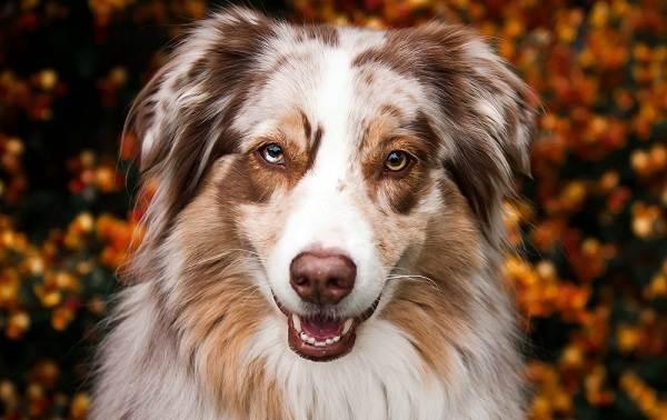 Средние-породы-собак-их-особенности-виды-названия-и-фото-32