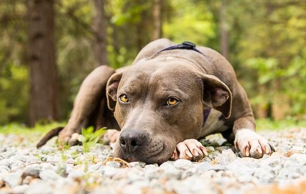 Средние-породы-собак-их-особенности-виды-названия-и-фото-4