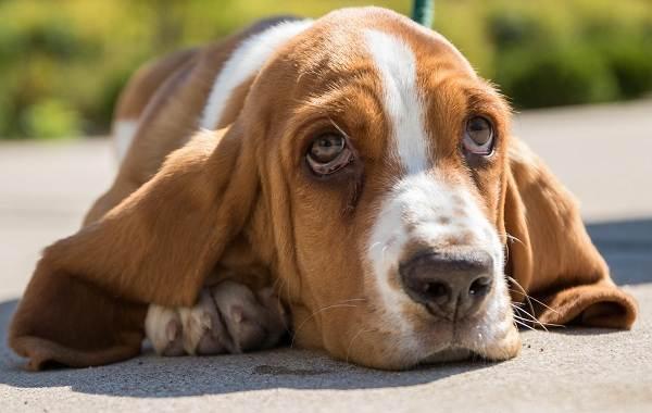 Средние-породы-собак-их-особенности-виды-названия-и-фото-6