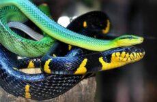 Виды змей. Описание, особенности, названия и фото видов змей