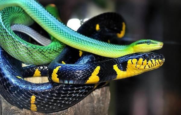 Виды-змей-Описание-особенности-названия-и-фото-видов-змей-1